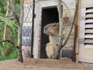 【癒やし】ときわ動物園の動物たちムービー(山口県宇部市)
